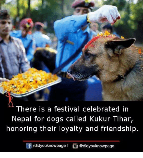 Nepal: There is a festival celebrated in  Nepal for dogs called Kukur Tihar,  honoring their loyalty and friendship.  /didyouknowpage1 @didyouknowpage