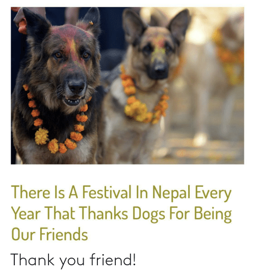 thank: There Is A Festival In Nepal Every  Year That Thanks Dogs For Being  Our Friends Thank you friend!