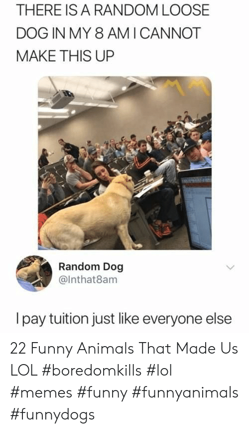 Animals, Funny, and Funny Animals: THERE IS A RANDOM LOOSE  DOG IN MY 8 AMI CANNOT  MAKE THIS UP  Random Dog  @Inthat8am  Ipay tuition just like everyone else 22 Funny Animals That Made Us LOL #boredomkills #lol #memes #funny #funnyanimals #funnydogs