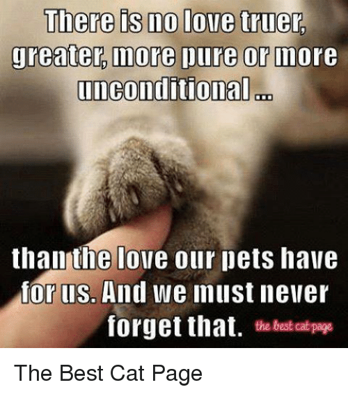 Love, Memes, and Best: There is no love truer.  greater more ure or Indore  unconditional on  than the love our pets have  or llSo  And we must never  forget that  the best Cat page The Best Cat Page
