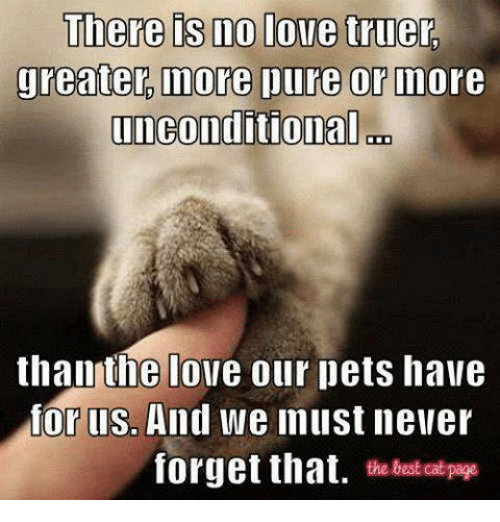 Love, Memes, and Best: There is no love truer.  greater more ure or Indore  unconditional on  than the love our pets have  or llSo  And we must never  forget that  the best Cat page