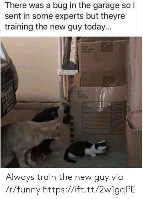 Funny, Today, and Train: There was a bug in the garage so i  sent in some experts but theyre  training the new guy today... Always train the new guy via /r/funny https://ift.tt/2w1gqPE