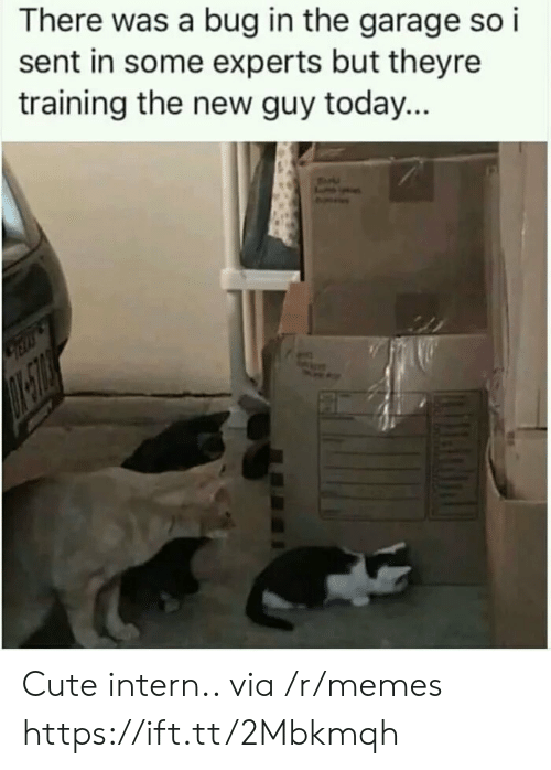 Cute, Memes, and Today: There was a bug in the garage so i  sent in some experts but theyre  training the new guy today... Cute intern.. via /r/memes https://ift.tt/2Mbkmqh
