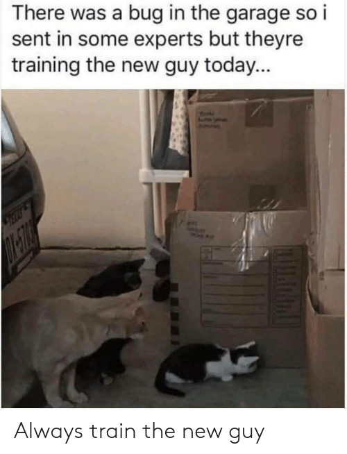 Today, Train, and Bug: There was a bug in the garage so i  sent in some experts but theyre  training the new guy today... Always train the new guy