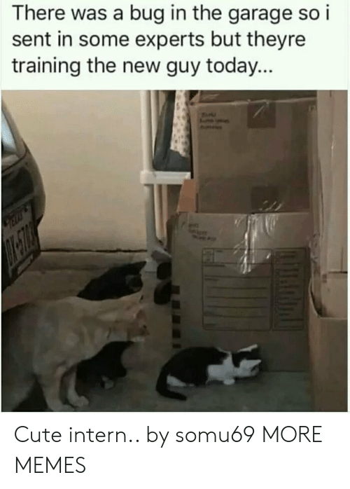 Cute, Dank, and Memes: There was a bug in the garage so i  sent in some experts but theyre  training the new guy today... Cute intern.. by somu69 MORE MEMES