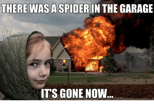 Spider, Gone, and Garage: THERE WAS A SPIDER IN THE GARAGE  ITS GONE NOW