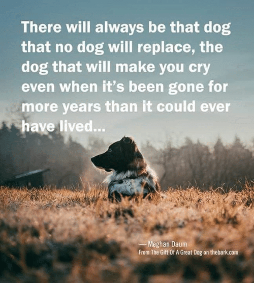 Memes, The Gift, and Been: There will always be that dog  that no dog will replace, the  dog that will make you cry  even when it's been gone for  more years than it could ever  have lived...  Meghan Daum  From The Gift Of A Great Dog on thebark.com