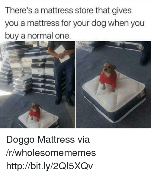 Http, Mattress, and Doggo: There's a mattress store that gives  you a mattress for your dog when you  buy a normal one Doggo Mattress via /r/wholesomememes http://bit.ly/2QI5XQv