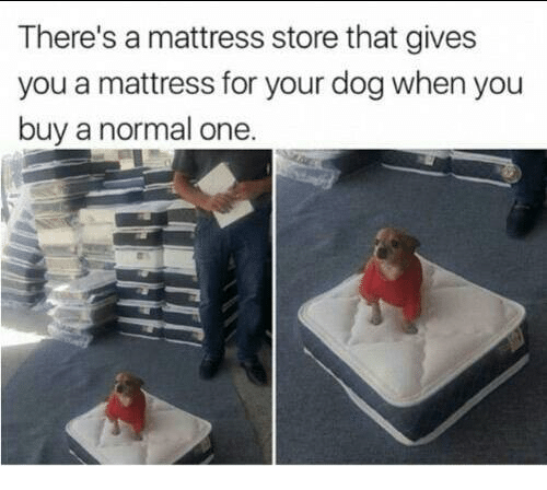 Dank, Mattress, and 🤖: There's a mattress store that gives  you a mattress for your dog when you  buy a normal one