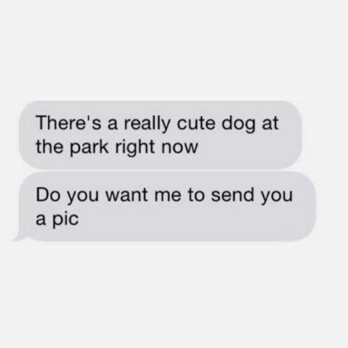 cute dog: There's a really cute dog at  the park right now  Do you want me to send you  a pic