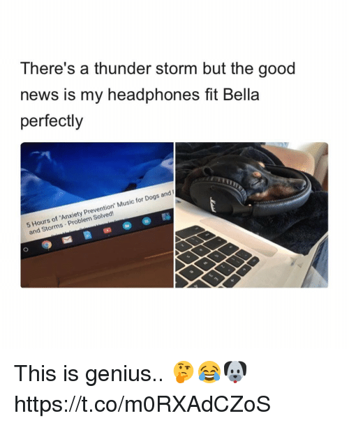 "coed: There's a thunder storm but the good  news is my headphones fit Bella  perfectly  Hours of 'Anxiety Prevention"" Music for Dogs and  and Storms Problem Solved! This is genius.. 🤔😂🐶 https://t.co/m0RXAdCZoS"