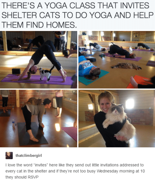 "Cats, Love, and Help: THERE'S A YOGA CLASS THAT INVITES  SHELTER CATS TO DO YOGA AND HELP  THEM FIND HOMES  thatclimbergirl  I love the word ""invites"" here like they send out little invitations addressed to  every cat in the shelter and if they're not too busy Wednesday morning at 10  they should RSVP"