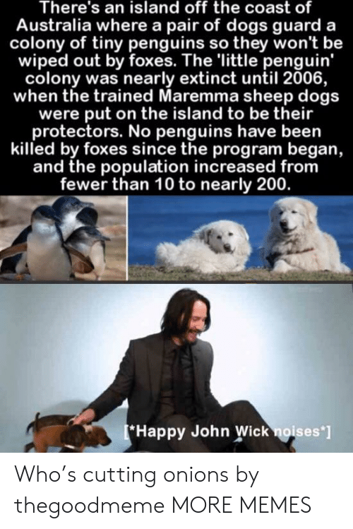 Dank, Dogs, and John Wick: There's an island off the coast of  Australia where a pair of dogs guard a  colony of tiny penguins so they won't be  wiped out by foxes. The 'little penguin'  colony was nearly extinct until 2006,  when the trained Maremma sheep dogs  were put on the island to be their  protectors. No penguins have been  killed by foxes since the program began,  and the population increased from  fewer than 10 to nearly 200.  Happy John Wick noises'] Who's cutting onions by thegoodmeme MORE MEMES