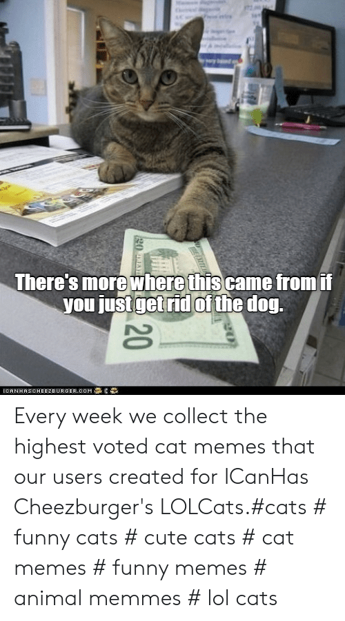 Cat Memes Funny: There's more where thiscame fromii  you just getrid of the dog Every week we collect the highest voted cat memes that our users created for ICanHas Cheezburger's LOLCats.#cats # funny cats # cute cats # cat memes # funny memes # animal memmes # lol cats