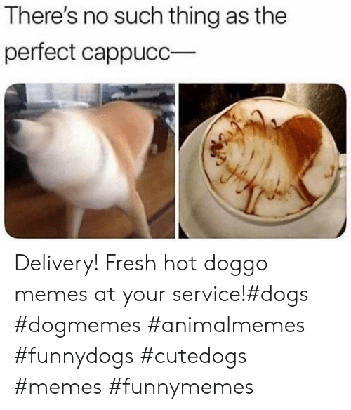 Doggo Memes: There's no such thing as the  perfect cappucC Delivery! Fresh hot doggo memes at your service!#dogs #dogmemes #animalmemes #funnydogs #cutedogs #memes #funnymemes
