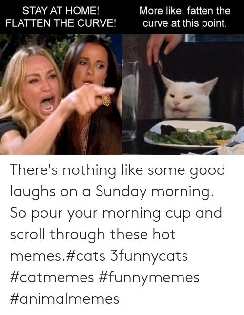 cup: There's nothing like some good laughs on a Sunday morning.  So pour your morning cup and scroll through these hot memes.#cats 3funnycats #catmemes #funnymemes #animalmemes