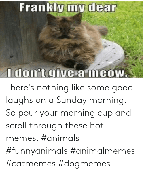 morning: There's nothing like some good laughs on a Sunday morning.  So pour your morning cup and scroll through these hot memes. #animals #funnyanimals #animalmemes #catmemes #dogmemes
