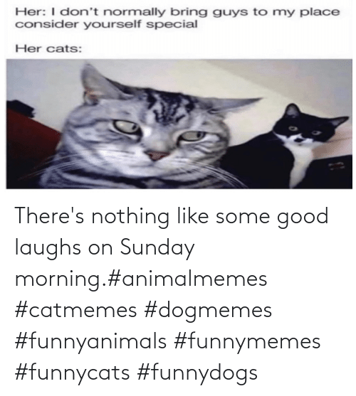Some Good: There's nothing like some good laughs on Sunday morning.#animalmemes #catmemes #dogmemes #funnyanimals #funnymemes #funnycats #funnydogs