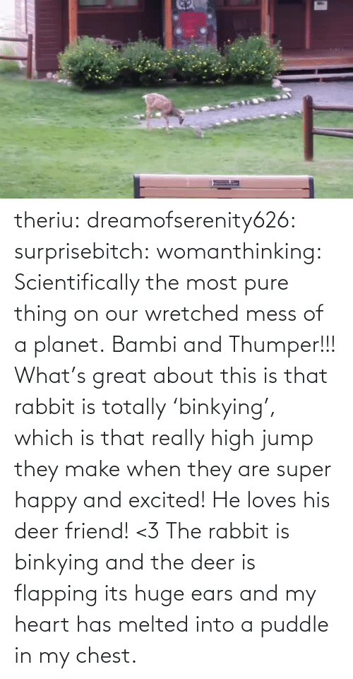 loves: theriu: dreamofserenity626:  surprisebitch:  womanthinking:  Scientifically the most pure thing on our wretched mess of a planet.  Bambi and Thumper!!!  What's great about this is that rabbit is totally 'binkying', which is that really high jump they make when they are super happy and excited! He loves his deer friend! <3  The rabbit is binkying and the deer is flapping its huge ears and my heart has melted into a puddle in my chest.