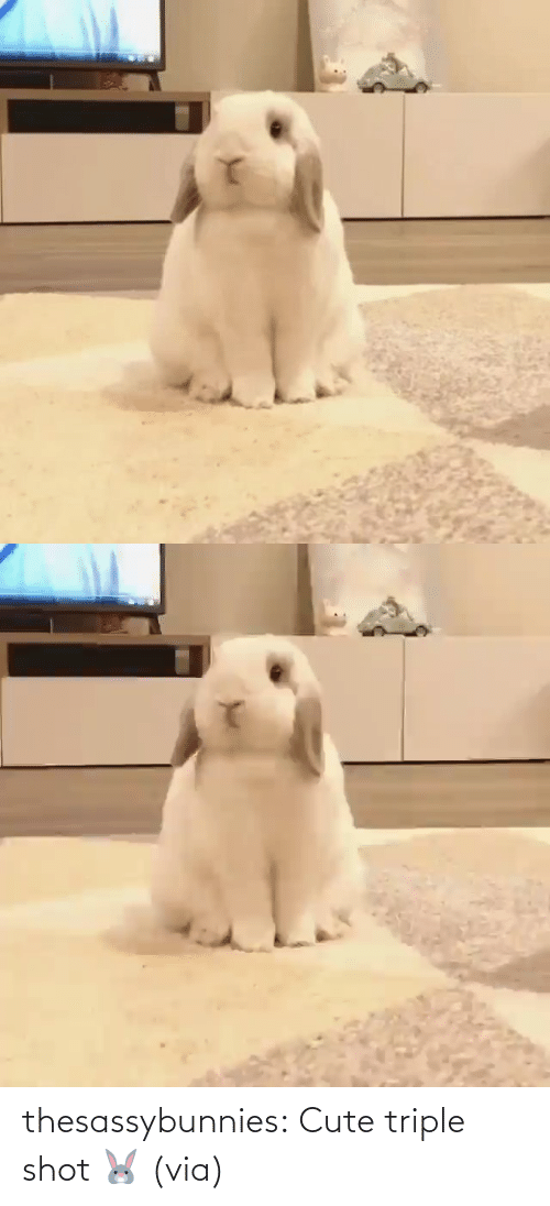 www: thesassybunnies:  Cute triple shot 🐰 (via)