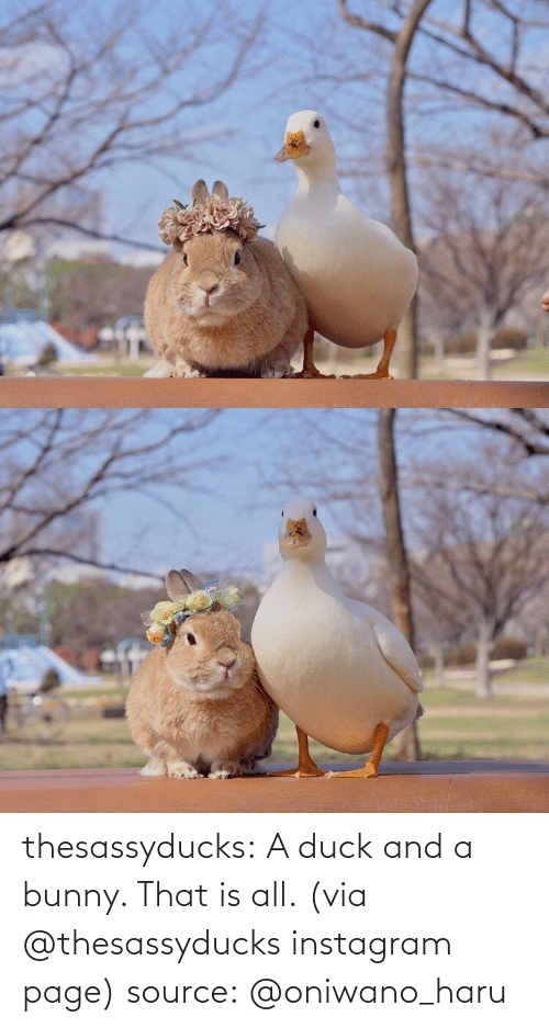 bunny: thesassyducks: A duck and a bunny. That is all. (via @thesassyducks instagram page) source: @oniwano_haru