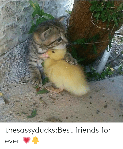 Best Friends: thesassyducks:Best friends for ever 💗🐥