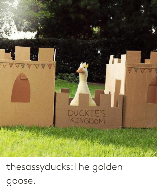 Golden: thesassyducks:The golden goose.