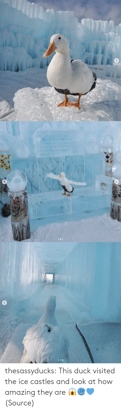 They Are: thesassyducks: This duck visited the ice castles and look at how amazing they are 😱🥶💙 (Source)