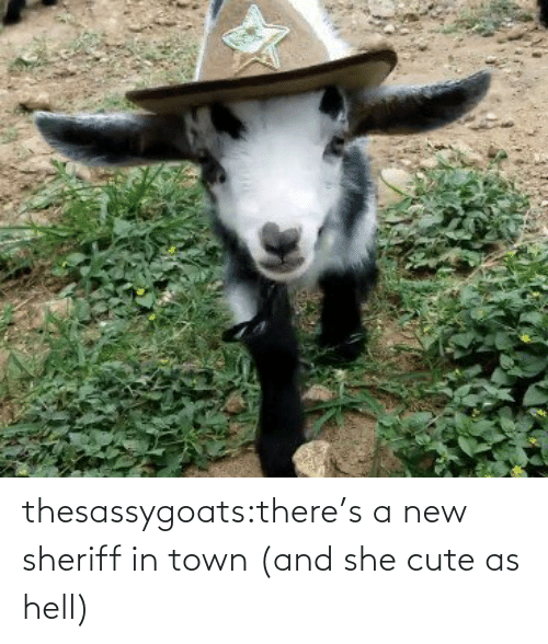 sheriff: thesassygoats:there's a new sheriff in town (and she cute as hell)