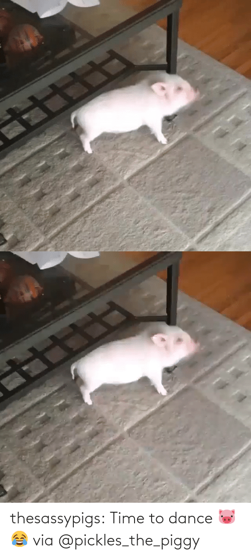 Dance: thesassypigs: Time to dance 🐷😂 via @pickles_the_piggy