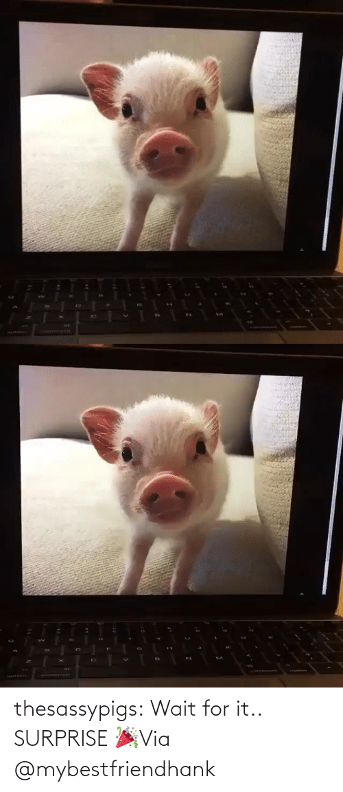 surprise: thesassypigs:  Wait for it.. SURPRISE 🎉Via @mybestfriendhank