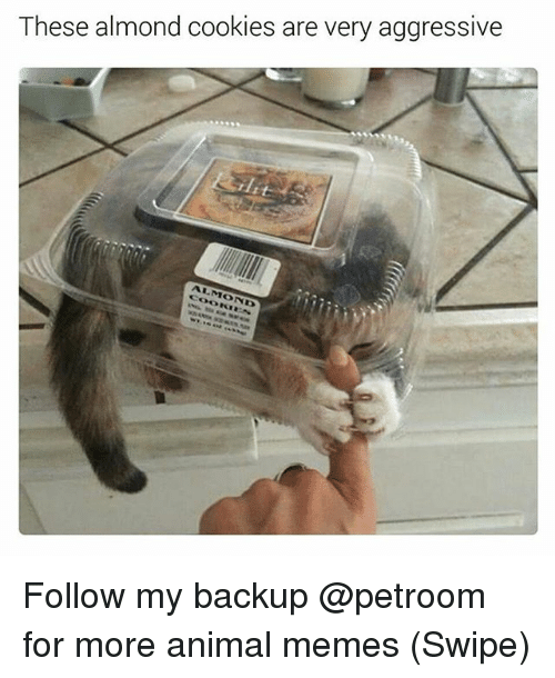 Cookies, Funny, and Memes: These almond cookies are very aggressive  ALMOND Follow my backup @petroom for more animal memes (Swipe)