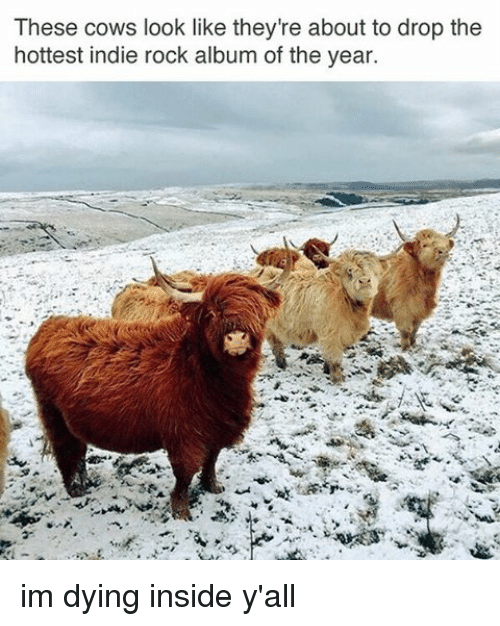 insideous: These cows look like they're about to drop the  hottest indie rock album of the year. im dying inside y'all