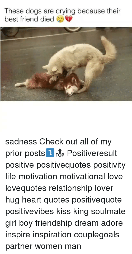 Dieded: These dogs are crying because their  best friend died sadness Check out all of my prior posts⤵🔝 Positiveresult positive positivequotes positivity life motivation motivational love lovequotes relationship lover hug heart quotes positivequote positivevibes kiss king soulmate girl boy friendship dream adore inspire inspiration couplegoals partner women man