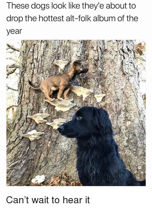 Dogs, Funny, and Girl Memes: These dogs look like they'e about to  drop the hottest alt-folk album of the  year Can't wait to hear it
