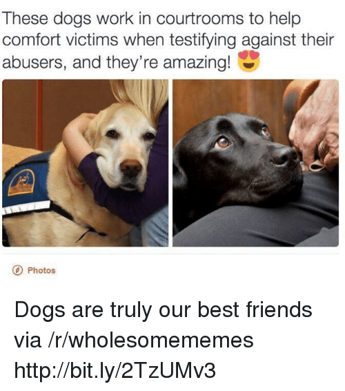 Dogs, Friends, and Work: These dogs work in courtrooms to help  comfort victims when testifying against their  abusers, and they're amazing!  Photos Dogs are truly our best friends via /r/wholesomememes http://bit.ly/2TzUMv3