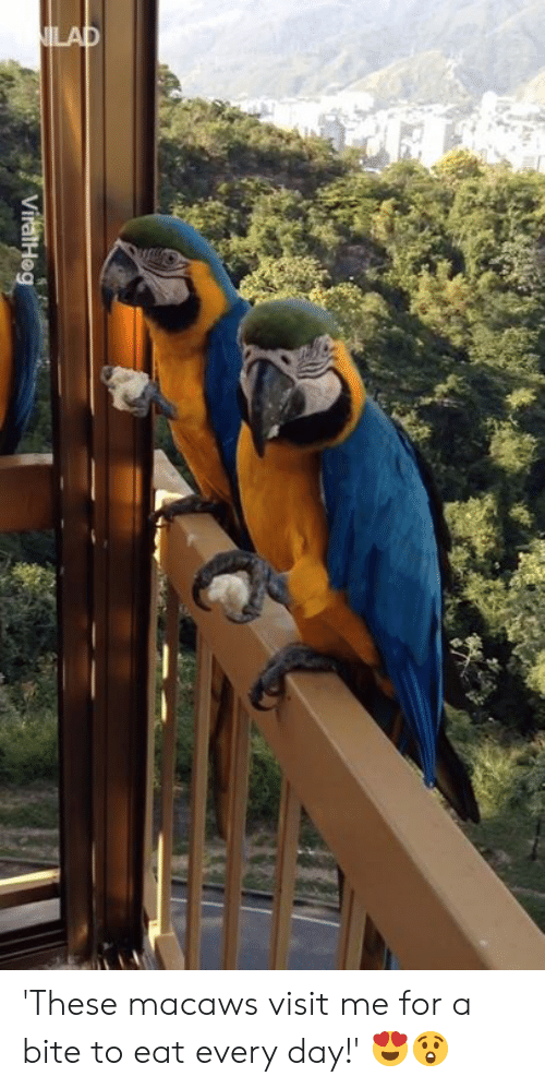 Dank, 🤖, and Day: 'These macaws visit me for a bite to eat every day!' 😍😲