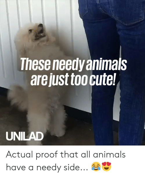 Animals, Cute, and Dank: These needy animals  are just too cute!  UNILAD Actual proof that all animals have a needy side... 😂😍
