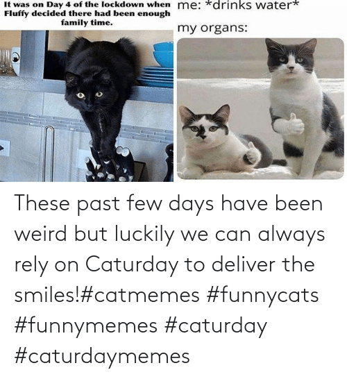 funnymemes: These past few days have been weird but luckily we can always rely on Caturday to deliver the smiles!#catmemes #funnycats #funnymemes #caturday #caturdaymemes