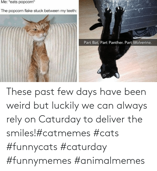 funnymemes: These past few days have been weird but luckily we can always rely on Caturday to deliver the smiles!#catmemes #cats #funnycats #caturday #funnymemes #animalmemes