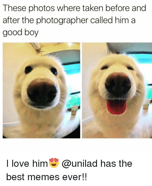 best memes ever: These photos where taken before and  after the photographer called him a  good boy I love him😍 @unilad has the best memes ever!!