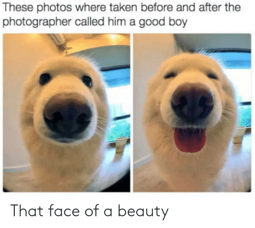 boy: These photos where taken before and after the  photographer called him a good boy That face of a beauty