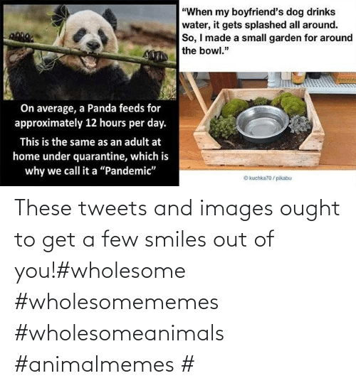 A Few: These tweets and images ought to get a few smiles out of you!#wholesome #wholesomememes #wholesomeanimals #animalmemes #