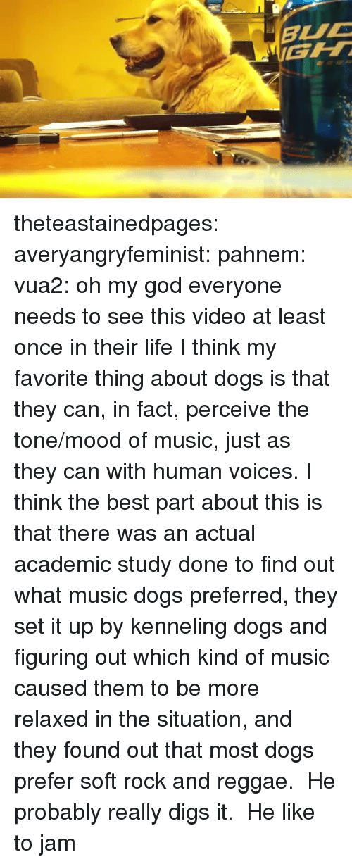 perceive: theteastainedpages: averyangryfeminist:  pahnem:  vua2:  oh my god  everyone needs to see this video at least once in their life  I think my favorite thing about dogs is that they can, in fact, perceive the tone/mood of music, just as they can with human voices.  I think the best part about this is that there was an actual academic study done to find out what music dogs preferred, they set it up by kenneling dogs and figuring out which kind of music caused them to be more relaxed in the situation, and they found out that most dogs prefer soft rock and reggae. He probably really digs it.   He like to jam