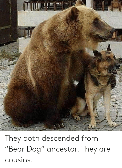 """Bear, Dog, and Cousins: They both descended from """"Bear Dog"""" ancestor. They are cousins."""