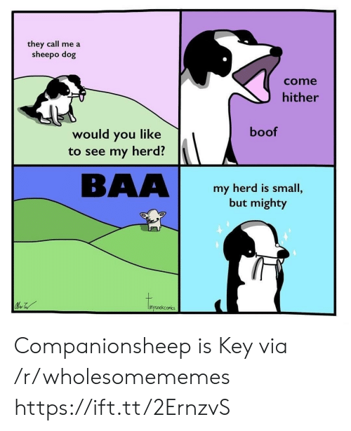 Boof: they call me a  sheepo dog  come  hither  boof  would you like  to see my herd?  BAA  my herd is small,  but mighty  inysnekconics Companionsheep is Key via /r/wholesomememes https://ift.tt/2ErnzvS