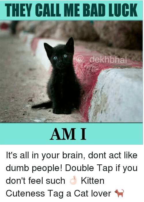 cat lover: THEY CALL MEBAD LUCK  dekh bhai  AMI It's all in your brain, dont act like dumb people! Double Tap if you don't feel such 👌🏻 Kitten Cuteness Tag a Cat lover 🐈