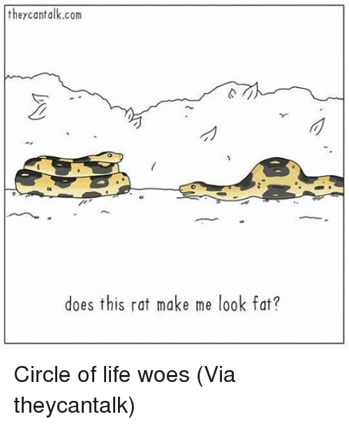 Make Me Look Fat: they cant alk.com  does this rat make me look fat? Circle of life woes (Via theycantalk)