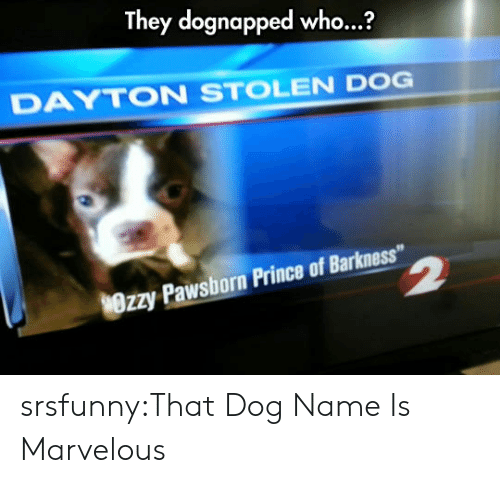 "Prince, Tumblr, and Blog: They dognapped who...?  DAYTON STOLEN DOG  Wrzy Pawsborn Prince of Barkness"" srsfunny:That Dog Name Is Marvelous"