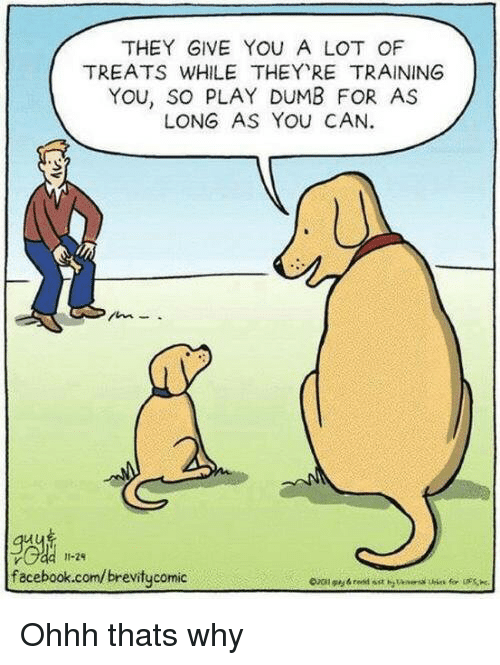 Dumb, Facebook, and facebook.com: THEY GIVE YOU A LOT OF  TREATS WHILE THEY RE TRAINING  YOU, SO PLAY DUMB FOR AS  LONG AS YOU CAN.  11-29  facebook.com/brevitycomic Ohhh thats why